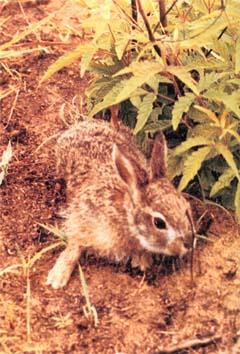 海南台风天兔_【最新海南兔图片】_草兔_雪兔